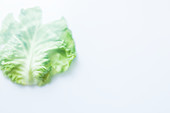 A white cabbage leaf