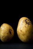 Zwei Kartoffeln