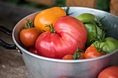 Heritage tomato varieties in an aluminum sieve