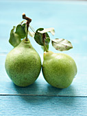 Two butter pears on a blue wooden background