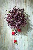 Fresh radish sprouts on a wooden background