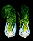 Two bok choy against a black background