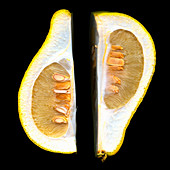 Two grapefruit halves against a black background