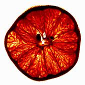 Eine Grapefruitscheibe im Durchlicht
