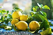 Freshly picked lemons with leaves in the sun on garden table