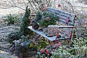 Gartenbank weihnachtlich dekoriert mit Sternen, Windlicht, Zapfen und Korb mit Koniferenzweigen