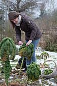 Frau erntet Grünkohl im Winter