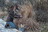 Frau bindet Gräser als Winterschutz zusammen