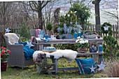 Frau dekoriert weihnachtliche Sitzgruppe im Garten: Schale mit Kiefer, Zwergfichte und Currykraut, Sterne, Zapfen, Kerzen, Bank mit Fell und Korbsessel als Sitzplatz