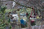 Einmachgläser als Windlichter an Lärchenzweig gehängt, weihnachtlich mit Sternen und Zapfen geschmückt
