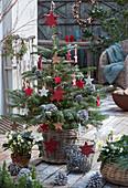 Nordmanntanne mit Holzsternen, Lichterkette und Zapfen als Weihnachtsbaum geschmückt