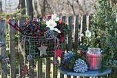 Korb mit Scheinbeere und Christrose als Weihnachtsdeko am Gartenzaun