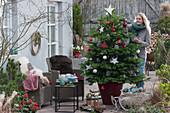 Frau schmückt Nordmanntanne als Weihnachtsbaum mit Sternen, Zapfen und Kugeln
