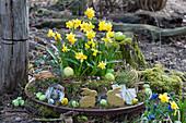 Schale mit Narzissen 'Tete a Tete' österlich mit Moos, Osterhasen, Ostereiern, Zweigen und Rinde im Garten