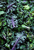 Purple baby kale leaves