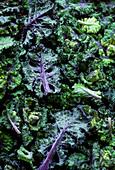 Junge Grünkohlblätter mit Wassertropfen