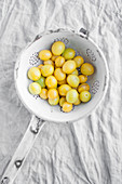 Yellow damsons (wild plums) in an old colander