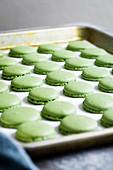 Matcha-Macarons zubereiten: Gebackene Teigkreise auf Backblech