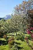 An orchard, Hotel Seehof, Goldegg am See, Pongau, Salzburger Land, Austria