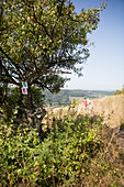 A vineyard hiking route with a view of Apach, France (tri-border area)