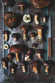 Fresh bay boletes with a knife