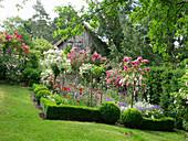 Blühendes Beet mit Rosenstämmchen und Buchs-Hecke