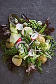 Sommersalat mit Frühkartoffeln, Radieschen, Saubohnen, Zucchini und roten Zwiebeln
