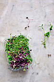 Various sprouts