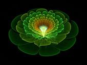 Flower, fractal illustration