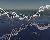 DNA over water, illustration