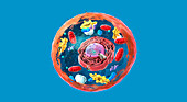 Animal cell structure, illustration