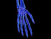Skeletal hand, illustration