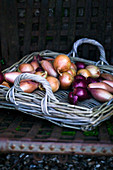 Wicker tray of onions