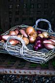 Verschiedene Zwiebelsorten auf Korbtablett