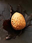 Walnut on a dry maple leaf