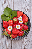 Fresh strawberries with daisies in a baking pan