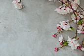 Cherry blossom on grey surface