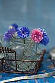 Blaue und rosafarbene Kornblumen in Einmachglas