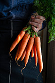 A hand holding a bundle of carrots