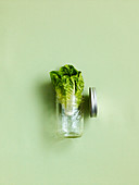 A symbolic image of a lettuce in a jar