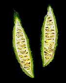 Two Slices of Bitter Melon on Black Background
