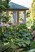 Die Lanzen-Silberkerze wächst im Schatten neben Hortensie