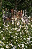 Frühlings-Margeriten im ländlichen Garten