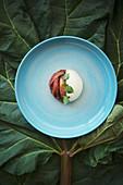 Take Five: Rhabarber mit Joghurt- Sahne-Mousse, Holunderblütensirup und Sauerampfer