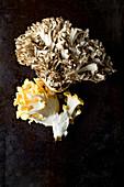 A yellow oyster mushroom and a maitake mushroom