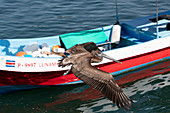 A pelican and a boat on the beach at Tambor, Nicoya Peninsula, Costa Rica, Central America