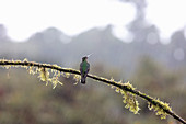 A hummingbird on a nectar feeding station, Los Quetzales National Park, Costa Rica, Central America
