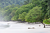 The Manuel Antonio National Park, Puntarenas, Quepos, Costa Rica, Central America