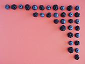 Blaubeeren und Brombeeren grafisch angeordnet in Ecke einer rosa Fläche