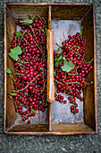 Fresh redcurrants in compartments in a wooden crate